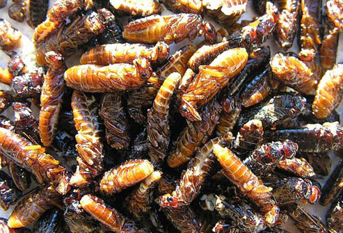They may be best known for chewing through wood, but in Africa and other parts of the world they're known as food.